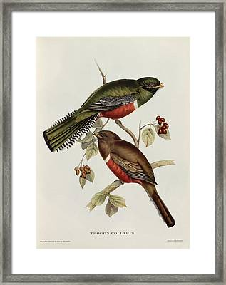 Trogon Collaris Framed Print by John Gould