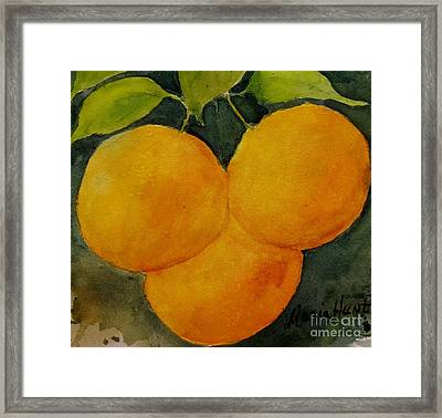 Trois Belle Pampelmousse Framed Print by Maria Hunt