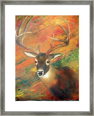 Trophy Deer Framed Print by Lynda McDonald