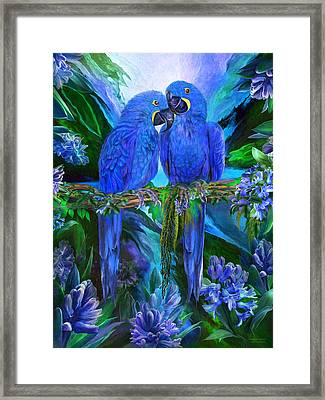 Tropic Spirits - Hyacinth Macaws Framed Print