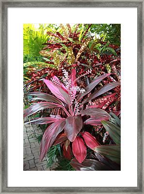 Tropic Walk Framed Print by Jim Derks