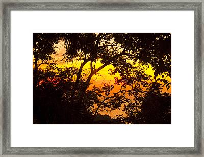 Tropical 10 Framed Print