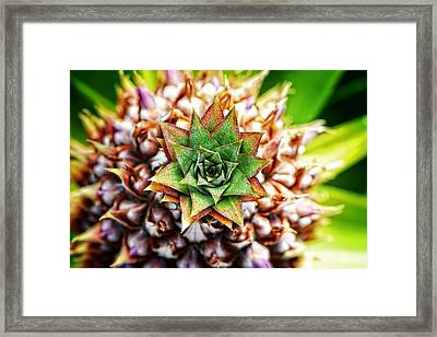 Tropical Art - Pineapple Punch - Sharon Cummings Framed Print by Sharon Cummings