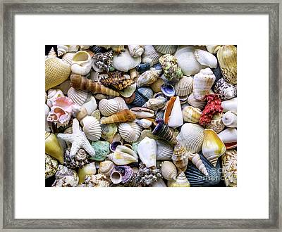 Tropical Beach Seashell Treasures 1500a Framed Print