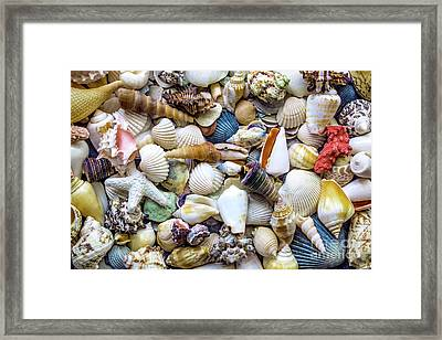 Tropical Beach Seashell Treasures 1529b Framed Print