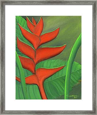 Tropical Beauty - Red And Green Heliconia Framed Print by Maria Williams