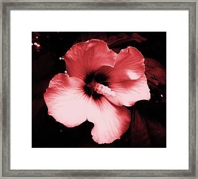 Tropical Beauty Framed Print by Mary Ellen Frazee