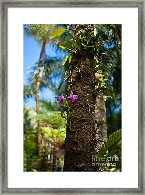 Tropical Beauty Framed Print by Mike Reid