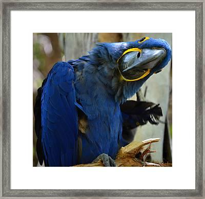 Tropical Bird- Maccaw Framed Print by See My  Photos