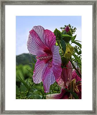 Framed Print featuring the photograph Tropical Bloom by Robert Pilkington