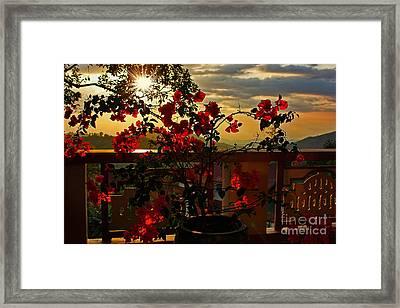 Tropical Bougainvillea Sunset By Kaye Menner Framed Print by Kaye Menner