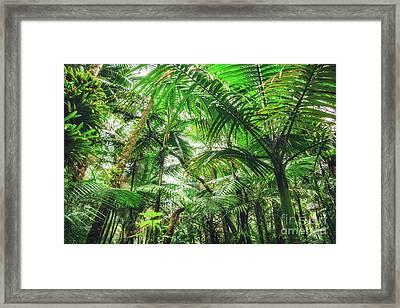 Tropical Canopy Framed Print by Joan McCool
