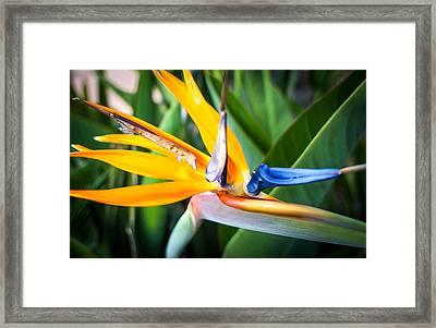 Tropical Closeup Framed Print