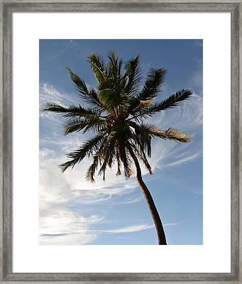 Tropical Coconut Palm Tree Maui Hawaii Framed Print by Pierre Leclerc Photography