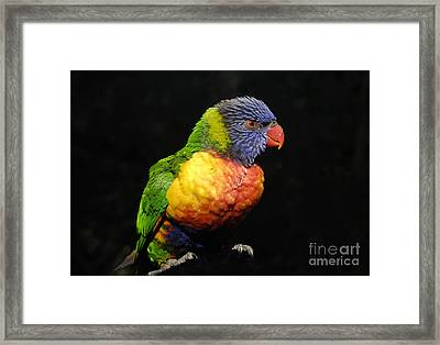 Tropical Colors Framed Print by David Lee Thompson