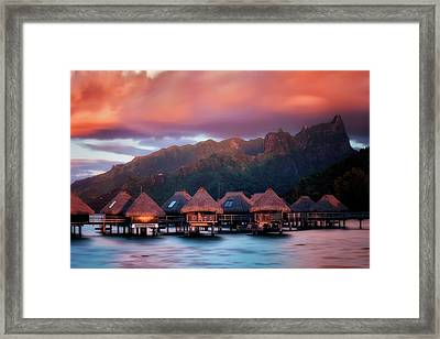 Tropical Crush  Framed Print by Nicki Frates