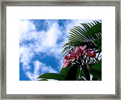 Tropical Days Framed Print by Edan Chapman
