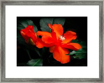 Tropical Elegance Framed Print