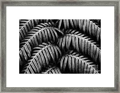 Tropical Fern Black White Framed Print