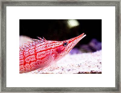 Tropical Fish Framed Print by Brenton Woodruff