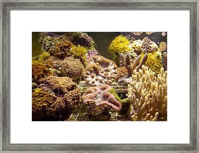 Tropical Fish Tank 10 Framed Print by Steve Ohlsen