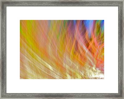 Tropical Flame Framed Print by William Wetmore