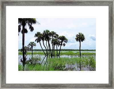 Tropical Flooding Framed Print by Rosalie Scanlon