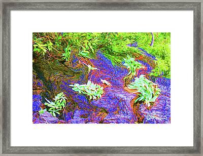Tropical Flora Framed Print by John Brennan