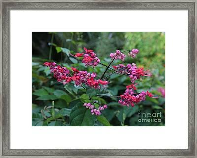 Tropical Flower Flow Framed Print by Carol Groenen