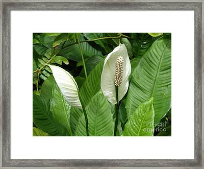 Tropical Flower Framed Print