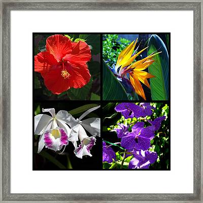Tropical Flowers Multiples Framed Print