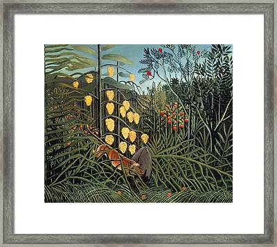 Tropical Forest  Battling Tiger And Buffalo Framed Print