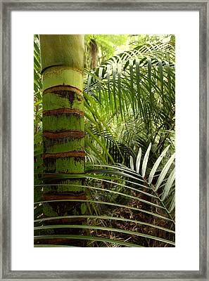Tropical Forest Jungle Framed Print by Les Cunliffe