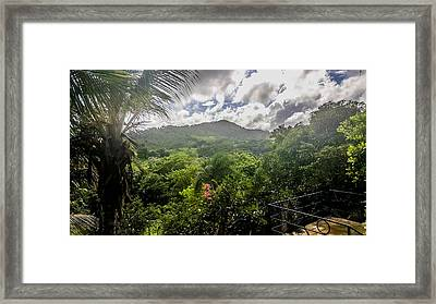 Tropical Forest Life Framed Print