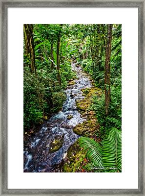 Tropical Forest Stream Framed Print by Christopher Holmes