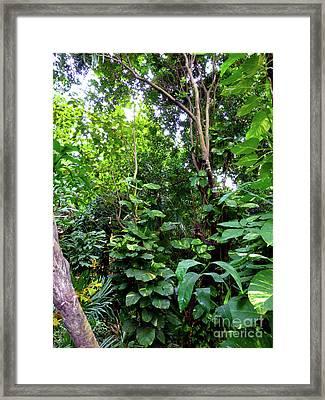 Framed Print featuring the photograph Tropical Garden by Francesca Mackenney