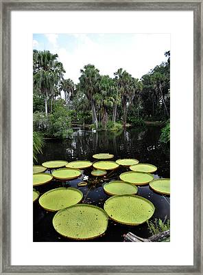Tropical Hopscotch Framed Print