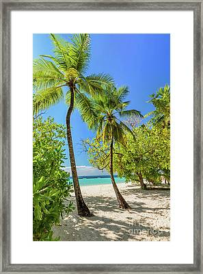 Tropical Island With Coconut Palm Trees On Sandy Beach In Maldives Framed Print