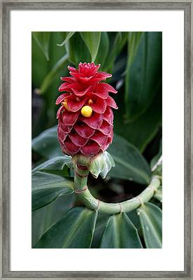 Tropical Framed Print by Jean Haynes
