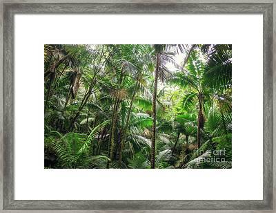 Tropical Jungle Framed Print by Joan McCool