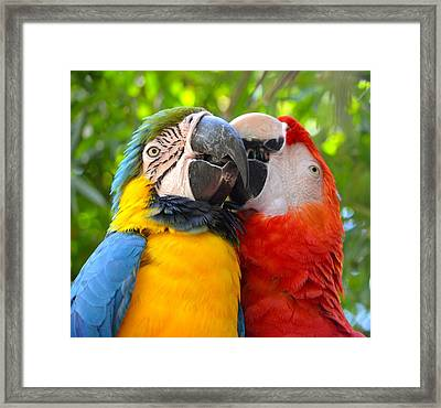 Tropical Kisses Framed Print