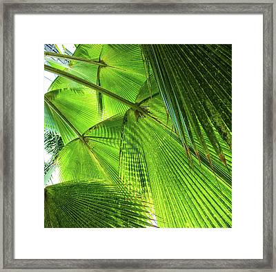 Tropical Framed Print by Martin Newman