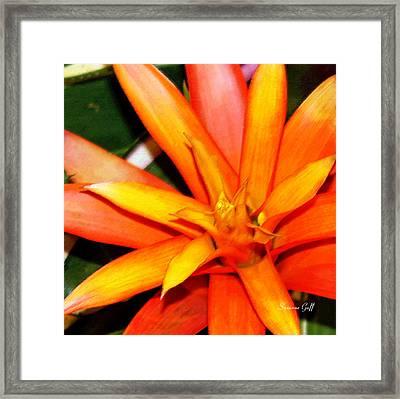 Tropical Orange II Framed Print