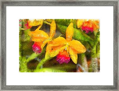 Tropical Orchid Flowers Pencil Framed Print by Edward Fielding