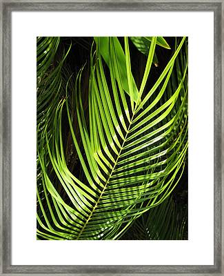Framed Print featuring the photograph Tropical Palm by Carol Sweetwood