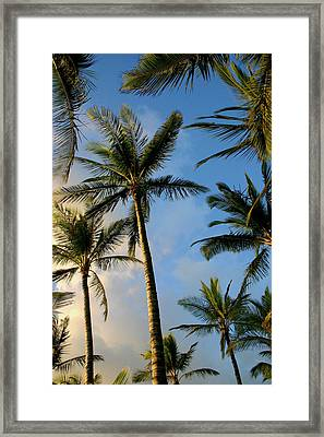 Tropical Palm Trees Of Maui Hawaii Framed Print