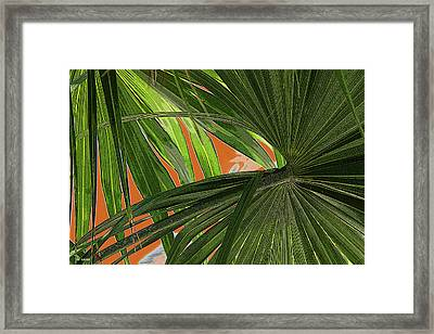 Tropical Palms 2 Framed Print by Frank Mari