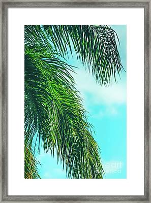 Tropical Palms Maui Hawaii Framed Print by Sharon Mau