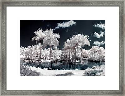 Tropical Paradise Infrared Framed Print by Adam Romanowicz