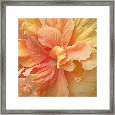 Tropical Peach Hibiscus Flower Framed Print